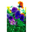 Adhésif décoratif pour vitre - style fleurs